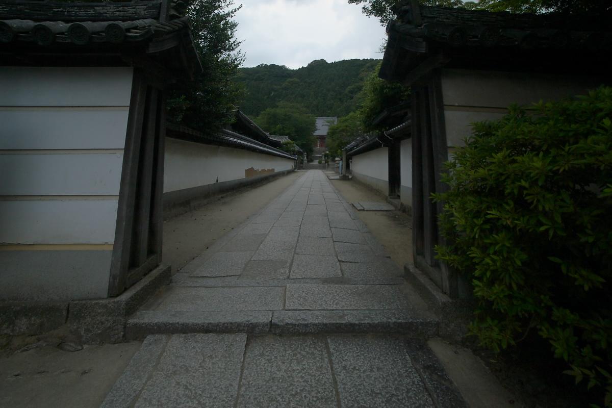 奈良 矢田寺 <紫陽花> 9_f0021869_9333213.jpg