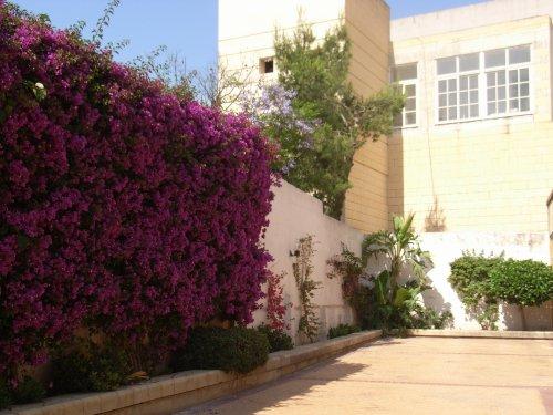 マルタ島での語学研修がおわりました_f0090286_045255.jpg