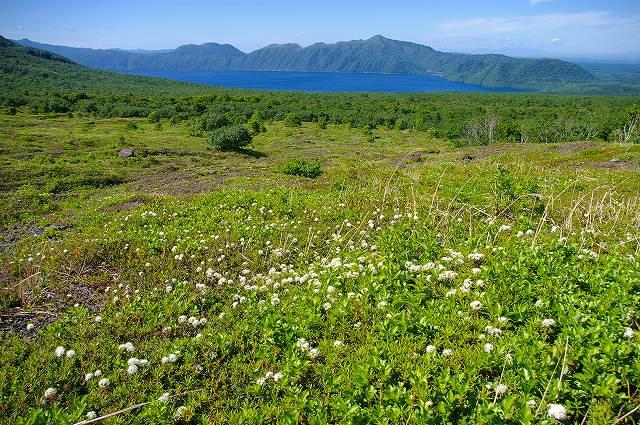 樽前山は花のシーズンイン_f0138096_22541322.jpg