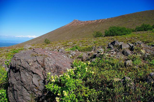 樽前山は花のシーズンイン_f0138096_2255980.jpg