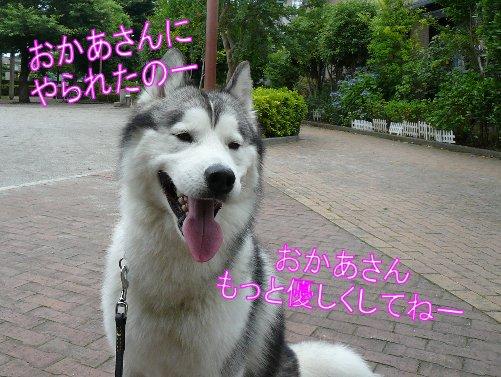 f0112407_1247466.jpg