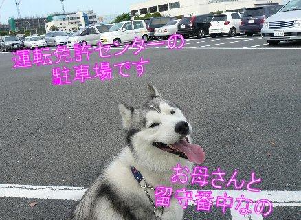 f0112407_15271065.jpg