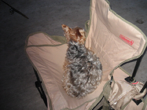 布製の折りたたみ椅子にすっぽり収まり、海風が心地よいのかのんびり昼寝をしているラッキーの姿。上から写した一枚。
