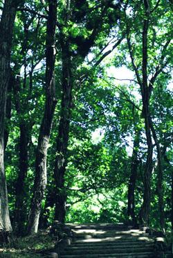 4時間散歩コースとビリー・ザ・ブートキャンプに入隊_b0048834_0125313.jpg