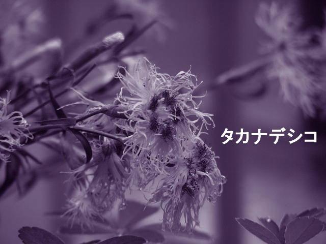 f0099535_2134635.jpg