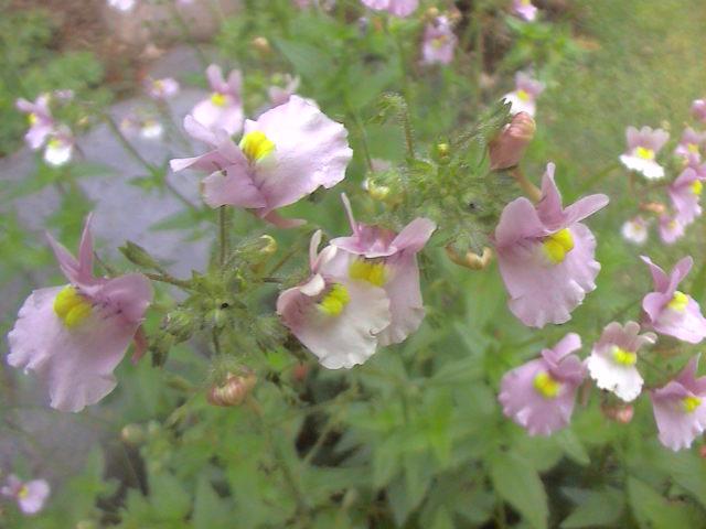 小さな花。_e0060555_2013222.jpg