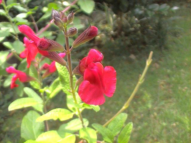 小さな花。_e0060555_20143796.jpg