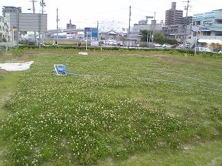 海田町東広島バイパス沿いのひまわり畑、すくすく育つ_b0095061_891178.jpg