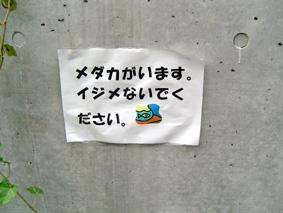 e0086608_18234955.jpg