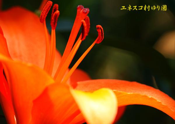 f0035323_835891.jpg