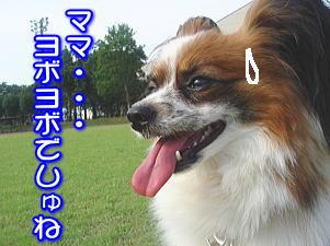 f0011845_023132.jpg