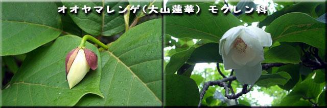 f0104569_1944852.jpg