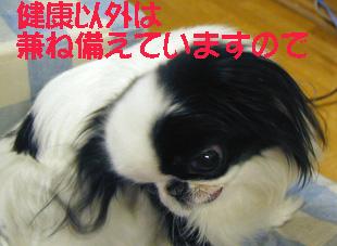 c0042081_1136775.jpg