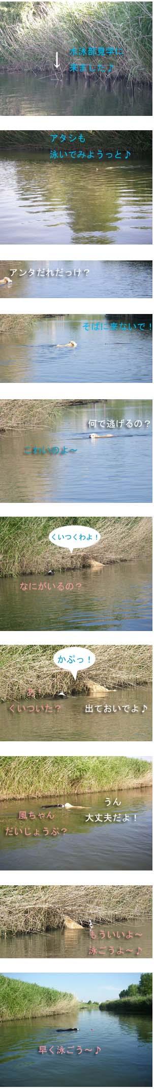 f0114893_961960.jpg