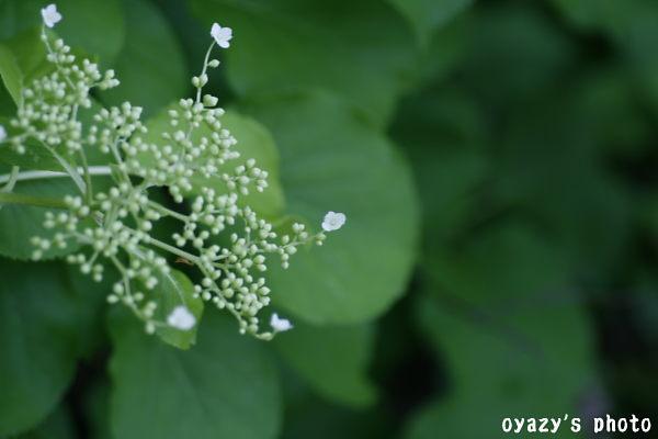 野の花_a0071514_20473814.jpg