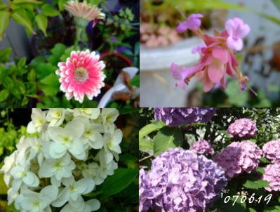 6月19日庭の花