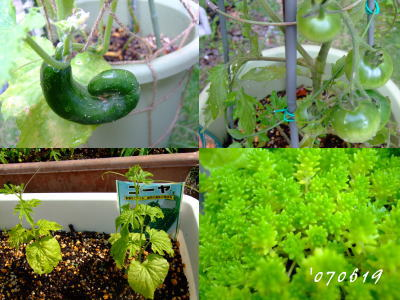 6月19日野菜を作ろう