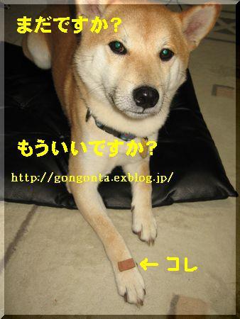 e0085147_14301564.jpg