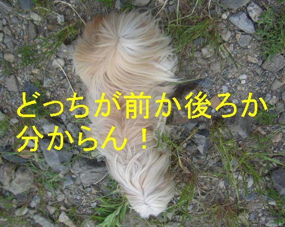 f0053952_14153647.jpg