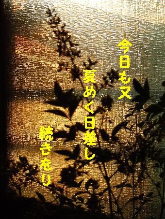 ・・・もう一枚_e0003966_2353660.jpg