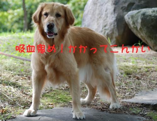 e0020166_12554561.jpg