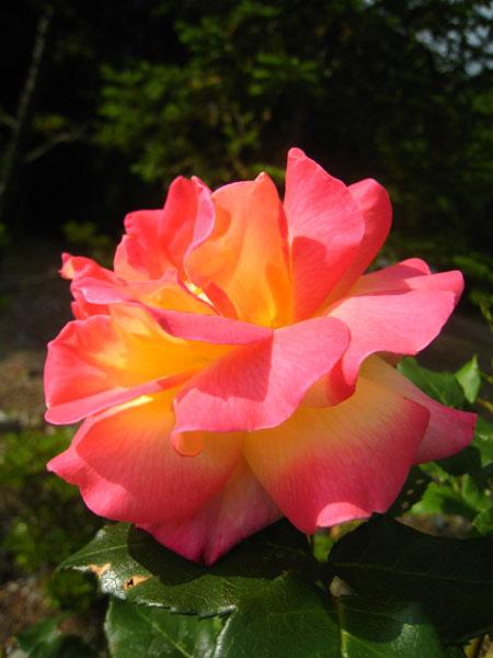 f0120317_1682342.jpg