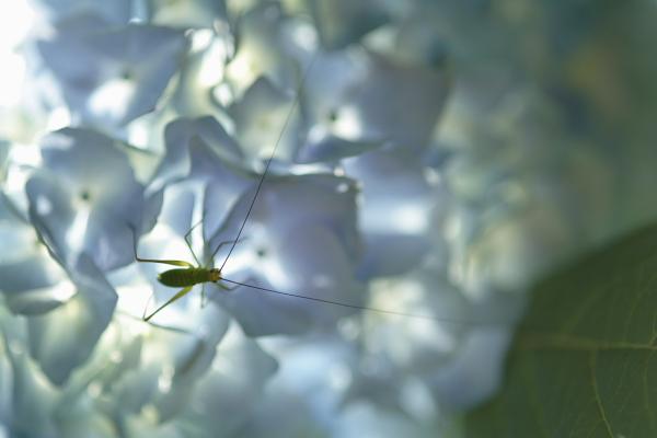 紫陽花園(太閤山ランド)_e0126642_1693470.jpg
