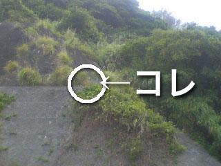 29.3km地点のアレの片割れ。_d0053751_12555070.jpg