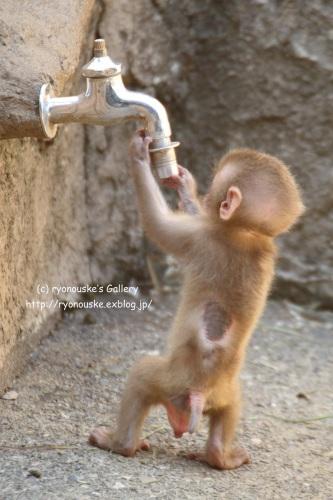 飲みたいの。。。_f0031022_22455435.jpg