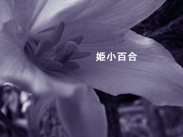 f0099535_18492158.jpg