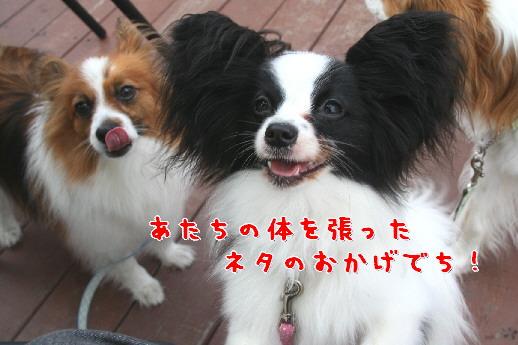 d0013149_0221349.jpg