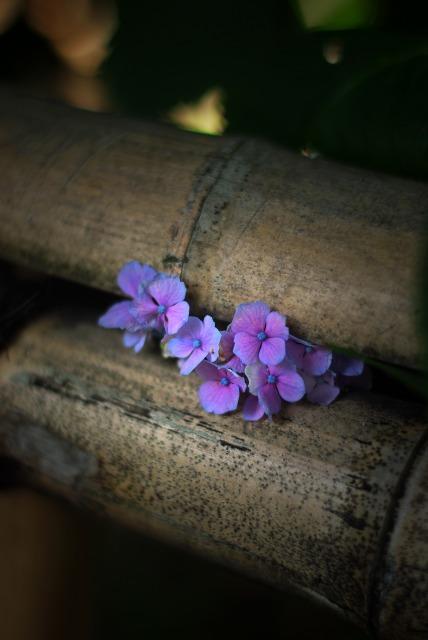 静寂の中で ~紫陽花~_e0063851_19202260.jpg
