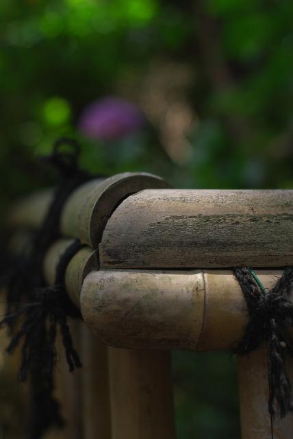静寂の中で ~紫陽花~_e0063851_1920658.jpg