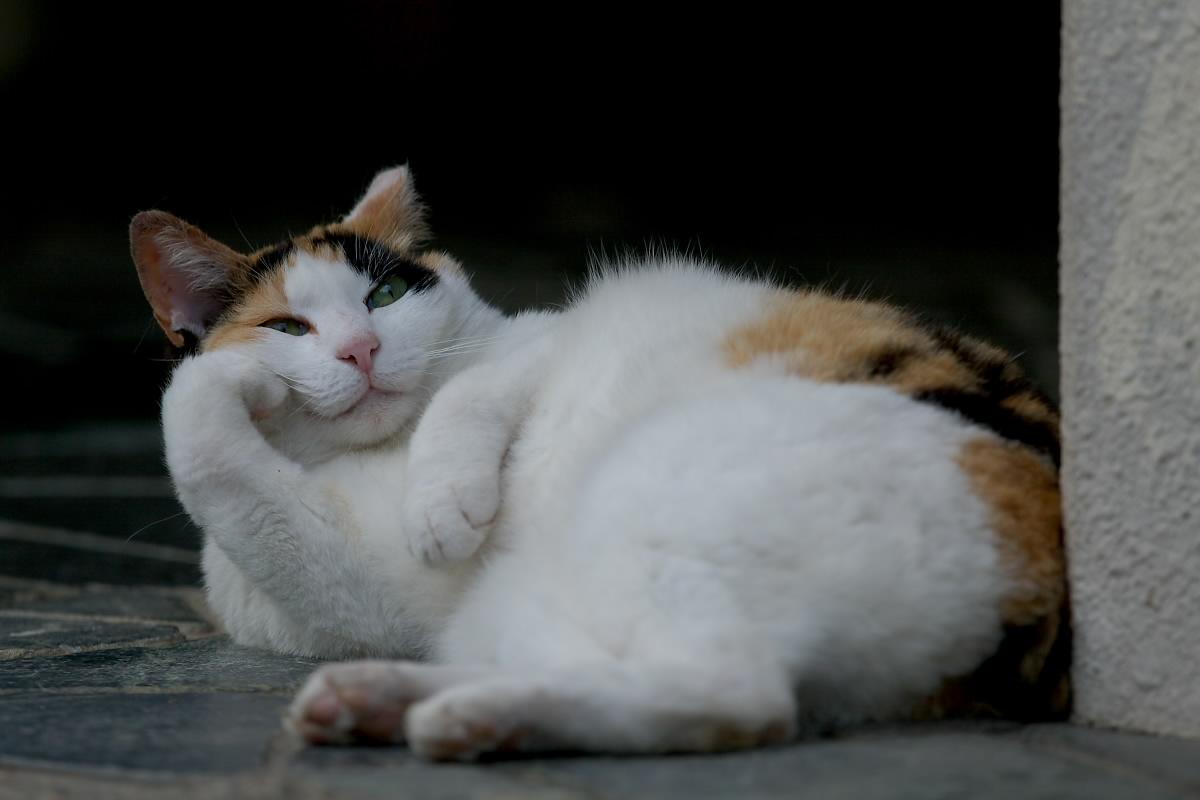 猫_f0021869_19534838.jpg