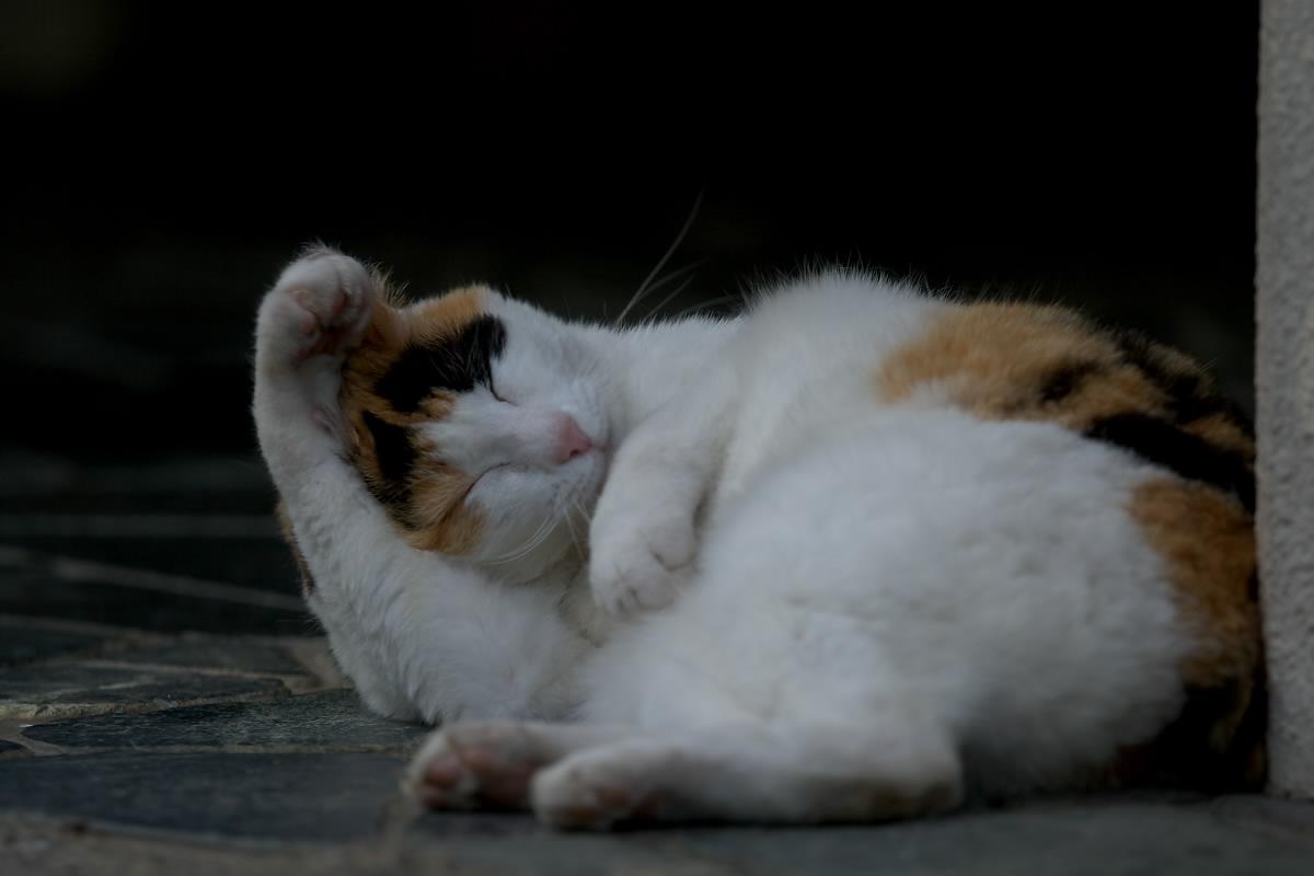 猫_f0021869_19541647.jpg