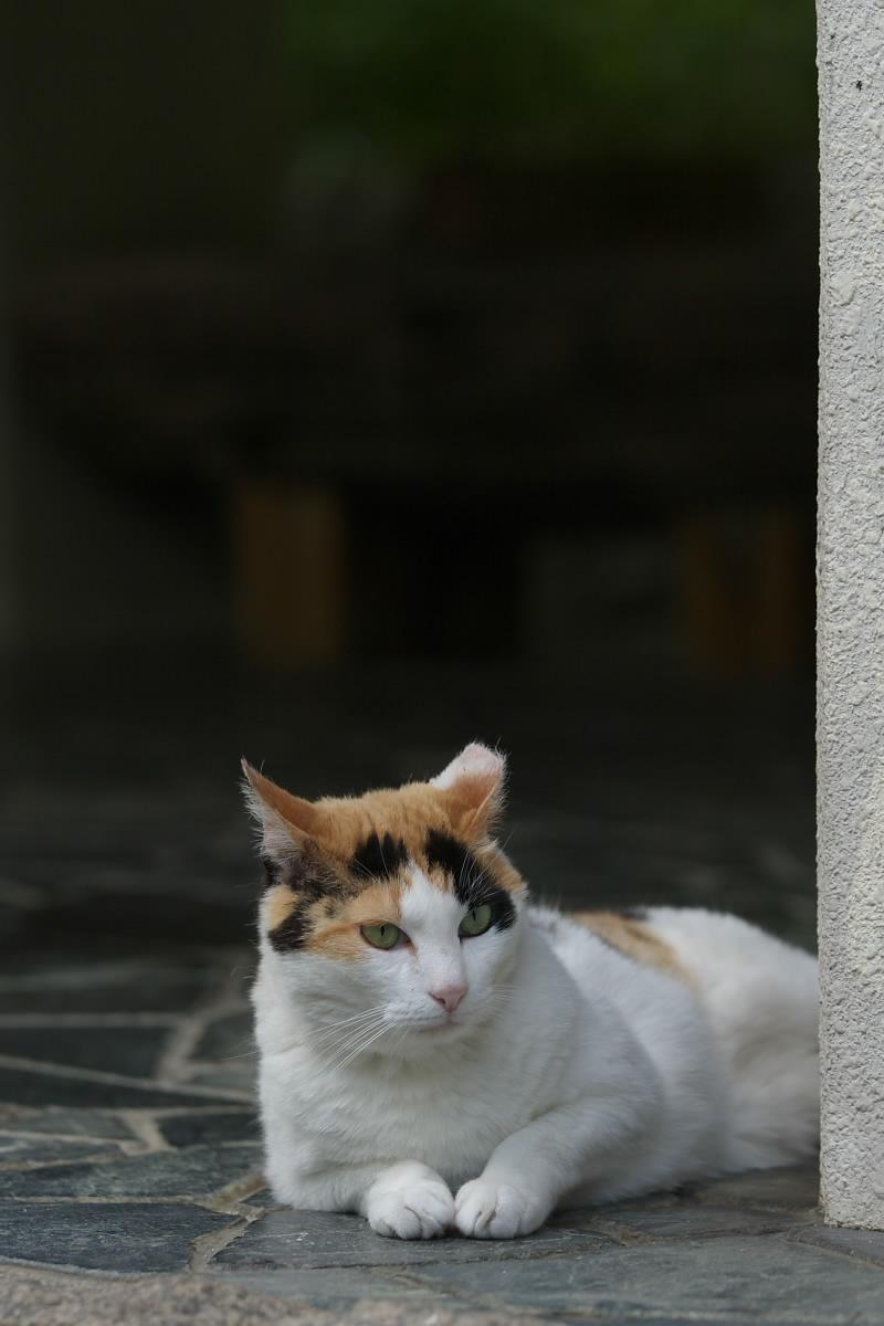 猫_f0021869_19544091.jpg