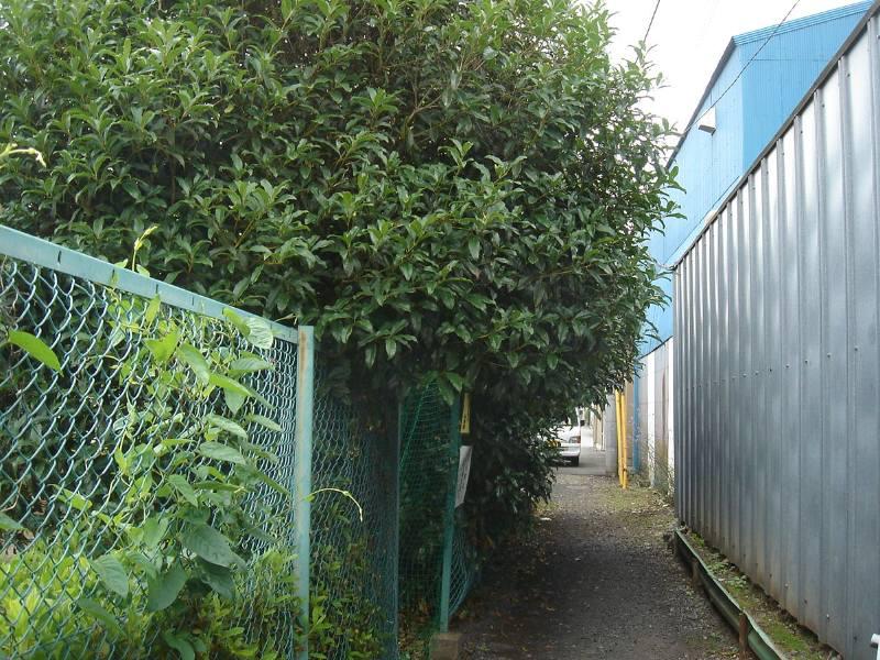 公共施設の樹木の剪定_f0059673_19405112.jpg