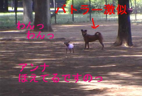 f0123589_1711129.jpg