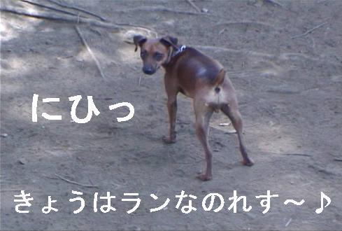 f0123589_1711949.jpg