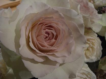 ピンクのバラ_b0105897_2301463.jpg