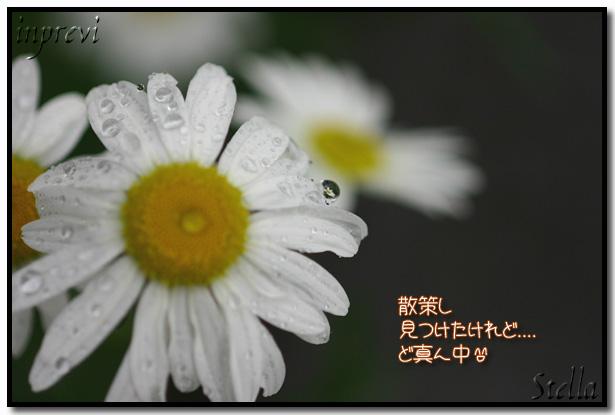 d0015026_8551381.jpg