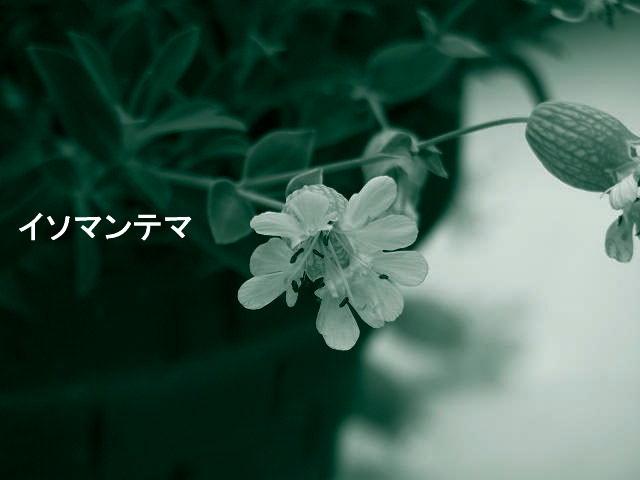 f0099535_21443173.jpg
