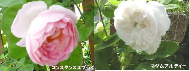 d0020136_18192954.jpg