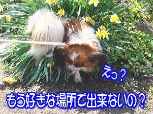 f0011845_2049981.jpg