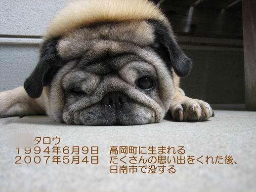 d0018475_0535823.jpg
