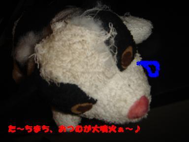 f0110199_033845.jpg