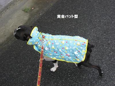 雨なので・・・_f0141516_1121257.jpg