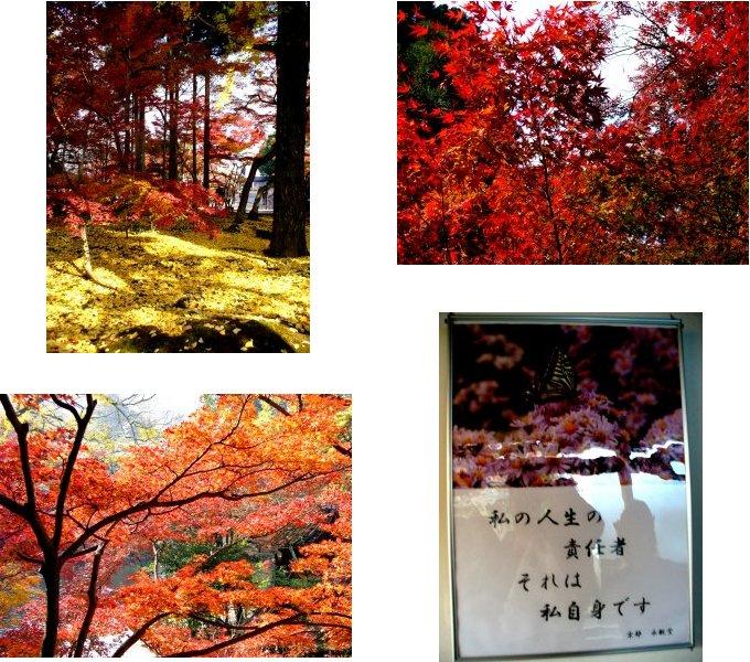 京都錦秋編(2):永観堂(05.11)_c0051620_14365677.jpg