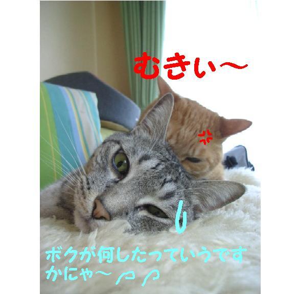d0081025_2033205.jpg