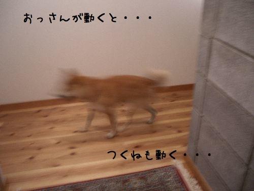 f0083432_132171.jpg